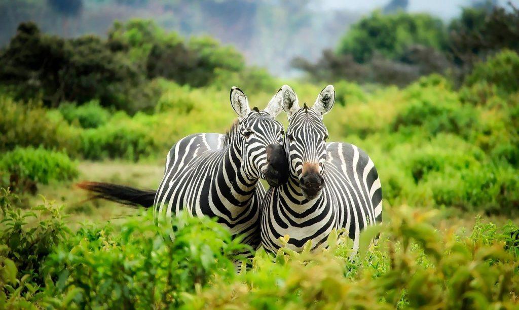חופשה בקניה